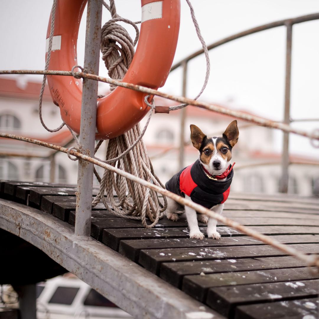 Consigli per la vacanza al mare con il cane