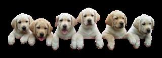 dogs_pets_landing_new_promo