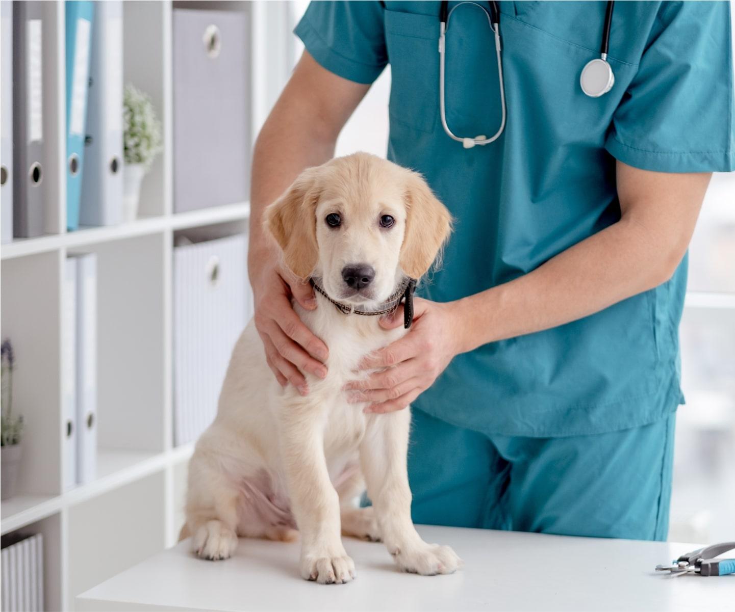 ConTe pet insurance cuccioli
